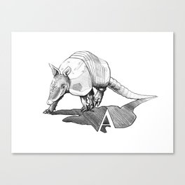 Armadillo  Canvas Print