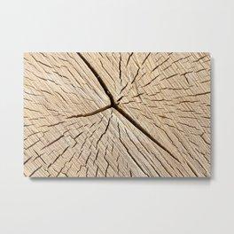 old cracked birch Metal Print