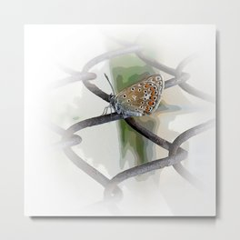 butterfly on fence Metal Print