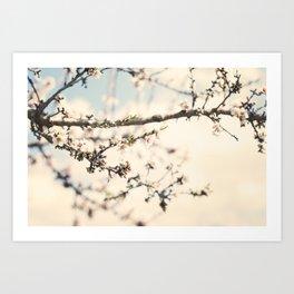 Flor del almendro. Art Print