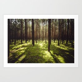 FOREST - Landscape and Nature Photography Art Print