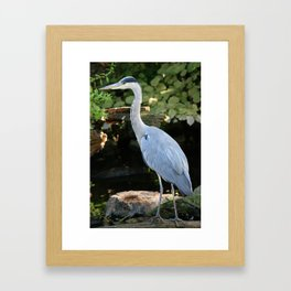 Grey Heron Framed Art Print