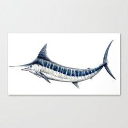 Blue Marlin (Makaira nigricans) Canvas Print