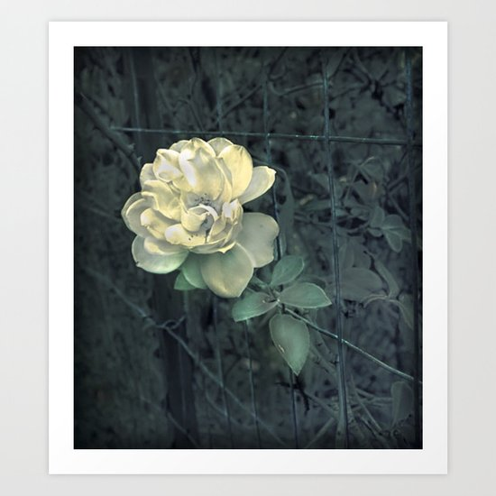 Fence Bloom Art Print