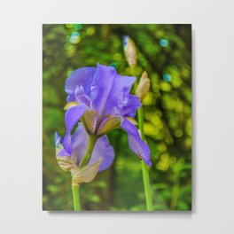 the lonely wild flower Metal Print