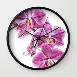 Orchid diverse widespread blooms colourful fragrant orchid family Wall Clock