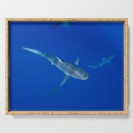 Hawaiian Shark VI Serving Tray