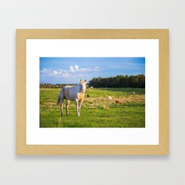 Horse in the Pasture Framed Art Print