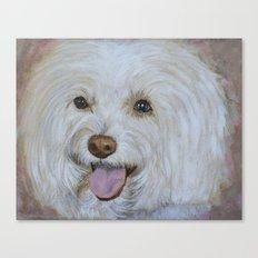 Bella the Maltese Canvas Print