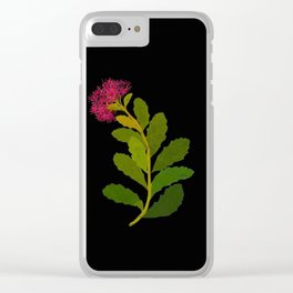 Sedum Telephium Mary Delany Vintage British Floral Flower Paper Collage Black Background Clear iPhone Case