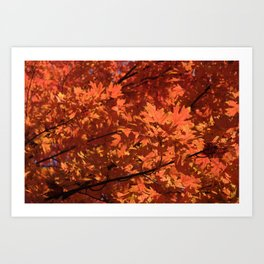 Fall Glow Art Print