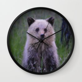 The most adorable grizzly bear cub in Jasper National Park   Canada Wall Clock