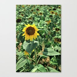 Flower No 6 Canvas Print