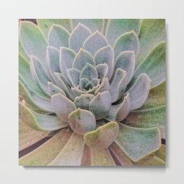Textured Succulent Macro Green Gray Metal Print