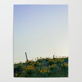 No. 4 Okanagan Sunflowers at Dawn Poster