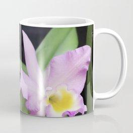 Cattleya Horace Maxima Orchid Coffee Mug