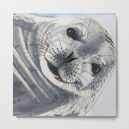Inquisitive Seal Metal Print