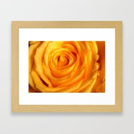 Golden Grandeur of Nature. Yellow Rose Framed Art Print