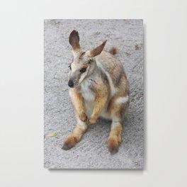 Wallaby Metal Print