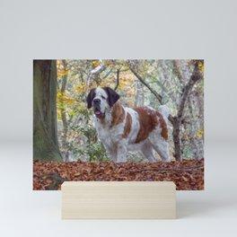 Big St Bernard dog in Autumn leaves Mini Art Print