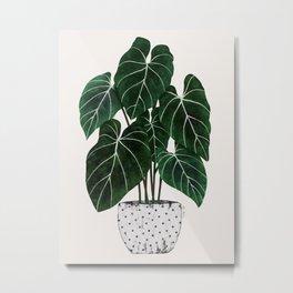 philodendron pot plant Metal Print