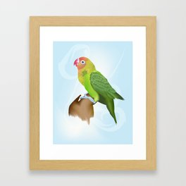 Parakeet Framed Art Print