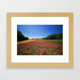 Flower Bed Framed Art Print