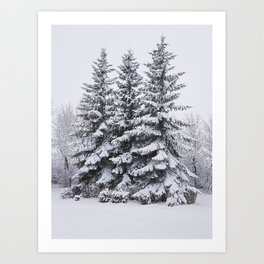 Snow Day - Trees in Winter Art Print