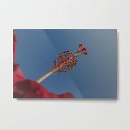 Hibiscus Too Metal Print