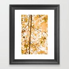 Japanese Maple Tree Leaves Framed Art Print