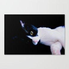 Black White Cat Canvas Print