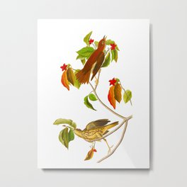 Wood Thrush Bird Metal Print