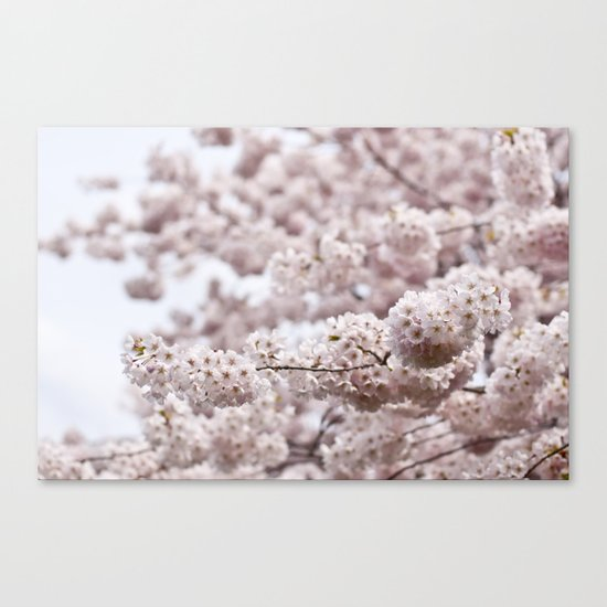 delicate blooms Canvas Print