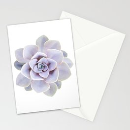 Echeveria perle von nurnberg Stationery Cards