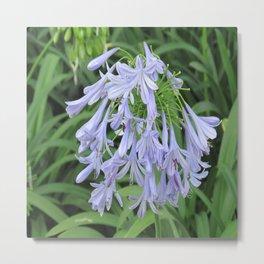 Blue Silky Blossoms Metal Print