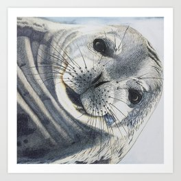 Inquisitive Seal Art Print
