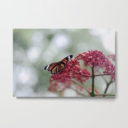 Butterfly Love for Red Flowers Metal Print