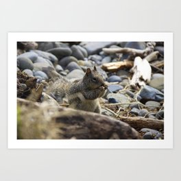 Squirrel Nibble Art Print