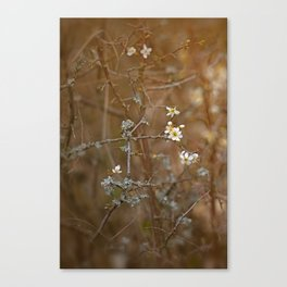 first blossoms Canvas Print