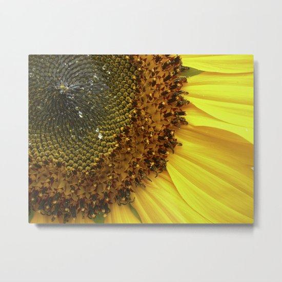 sunflower macro II Metal Print