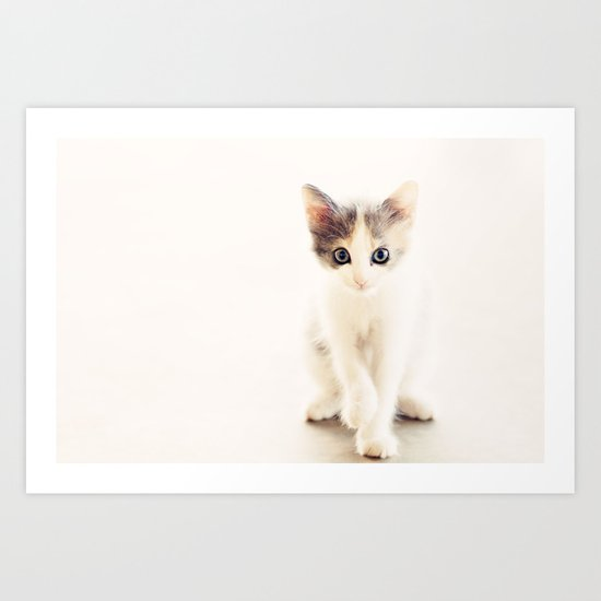 White and Grey Kitten Art Print