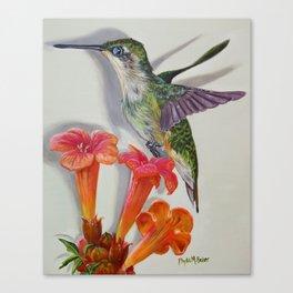 Hummingbird And A Trumpet Vine Canvas Print
