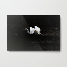 Great Heron Flying Metal Print