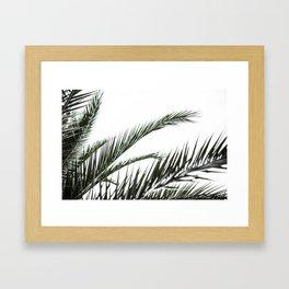 Palm Trees 3 Framed Art Print