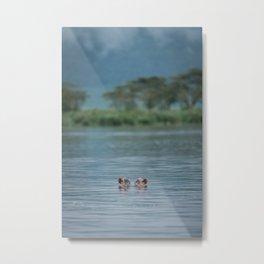 Ngorongoro Hippo Metal Print