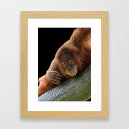 Smiling Young Orangutan Framed Art Print