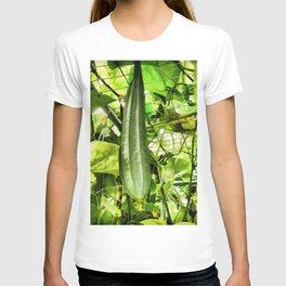 Wax Gourd winter melon T-shirt