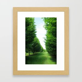 Hornbeam Tree Avenue Framed Art Print