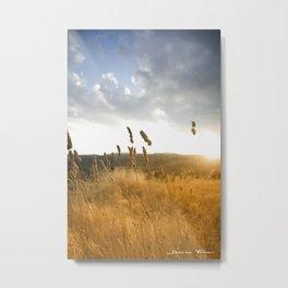 Atardeceres Metal Print