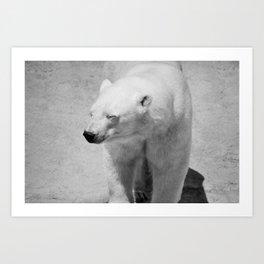 Polar Bear Photography   Canada   Black and white   Mammal   Nature   Wildlife Art Print